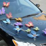 Бабочки(700)